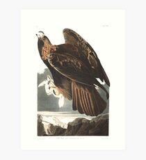 Golden Eagle - John James Audubon  Art Print