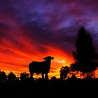 Sunset Droughtmaster by Penny Kittel