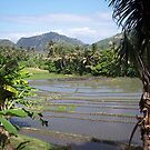 Balinese Terraces by Susan Moss