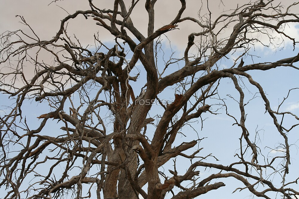 My Favourite Childhood Tree by rossco