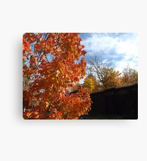 Sixth Street Embankment, Autumn Colors, Abandoned Pennsylvania Railroad Embankment, Jersey City, New Jersey  Canvas Print