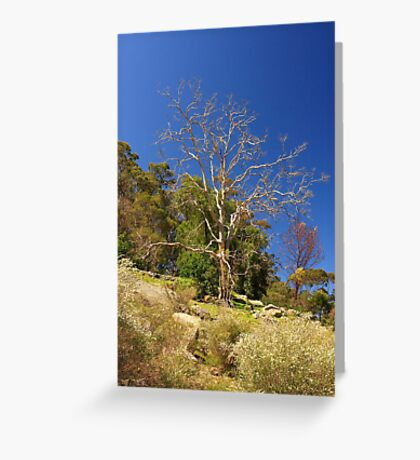 Tree On The Hill  Greeting Card