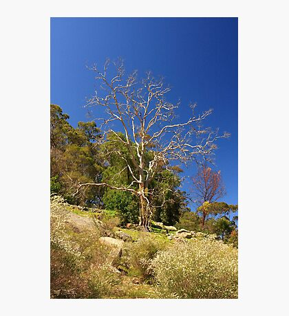 Tree On The Hill  Photographic Print