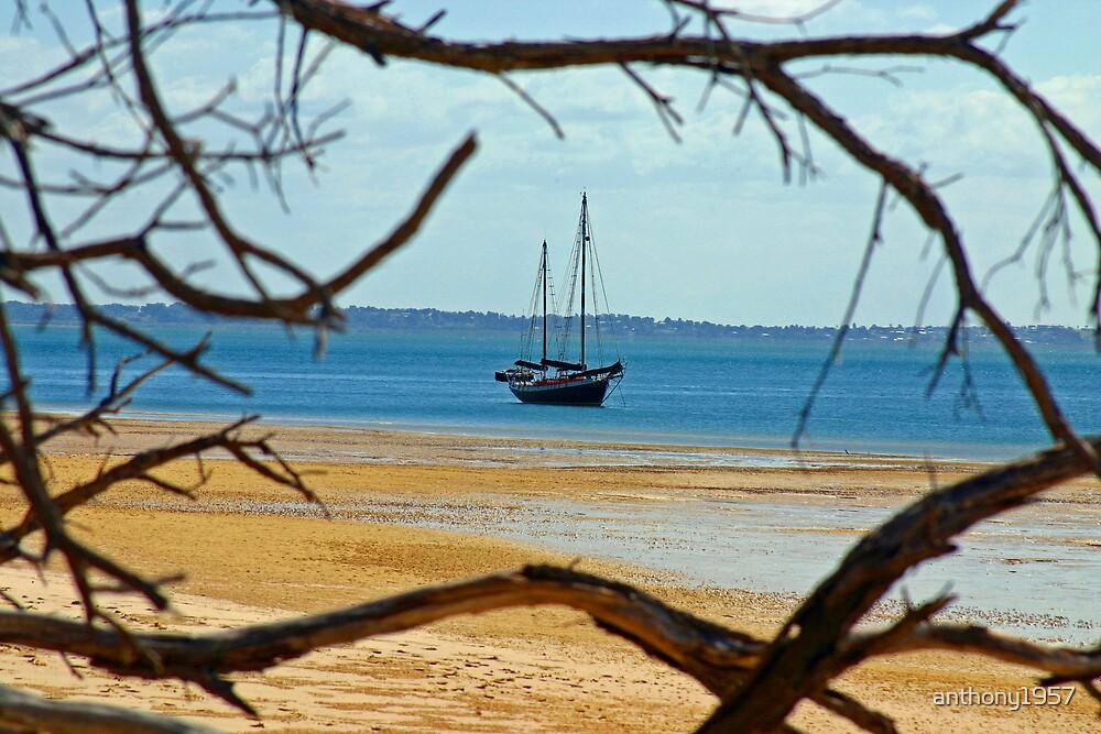 Fraser Island Framing by anthony1957