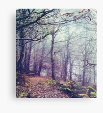 Peak District Forest  Metal Print