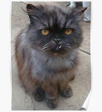 Goofy Cat Poster
