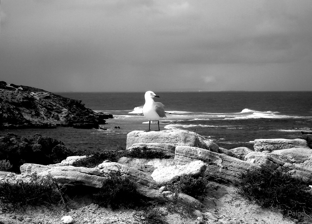 Seagull on cliffs by Paige