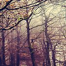 Peak District Trees  by Nicola  Pearson