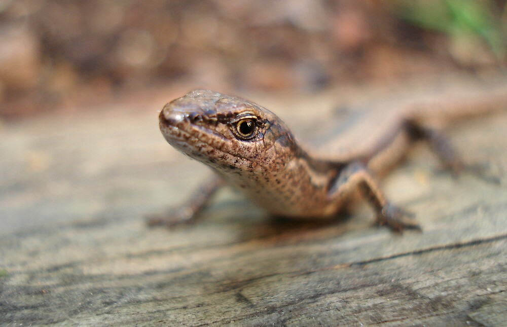 Lizard by Nathan T