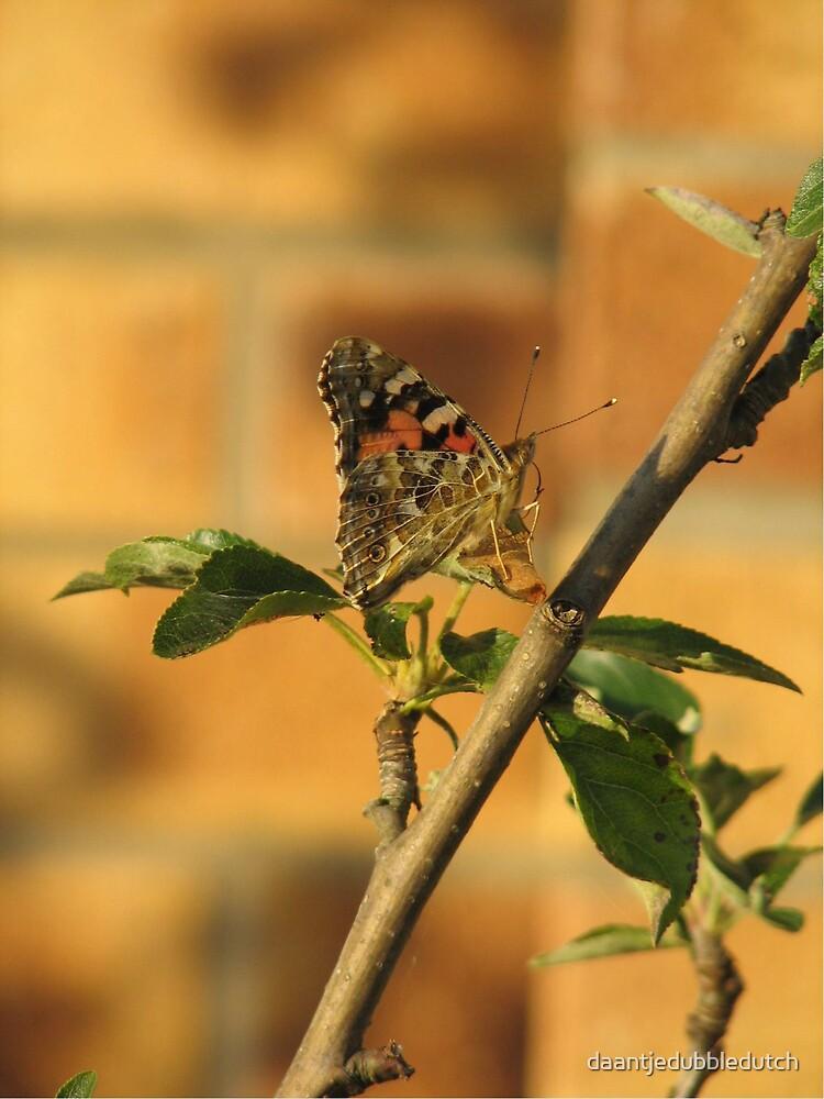 butterfly by daantjedubbledutch