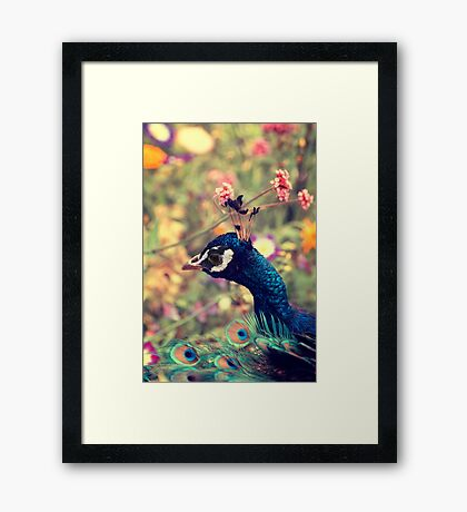 Peacock Flowers Framed Print