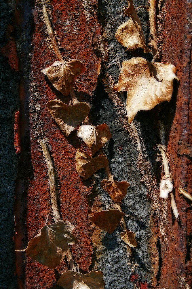 Two Kinds of Decay by David Pearson