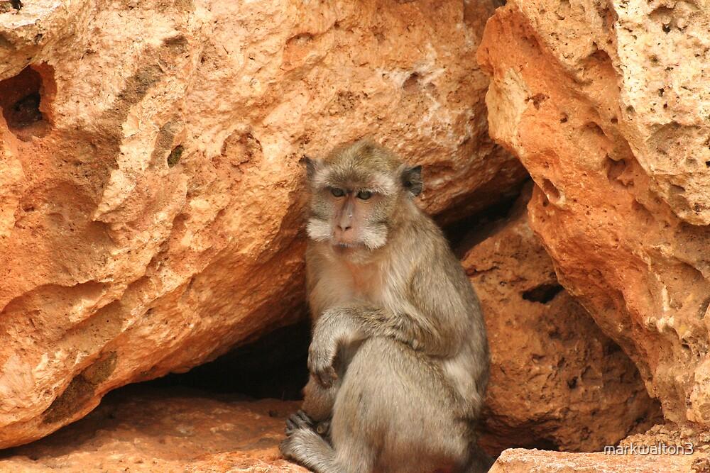 monkey business by markwalton3
