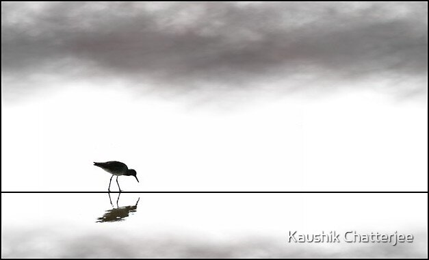The Bird by Kaushik Chatterjee