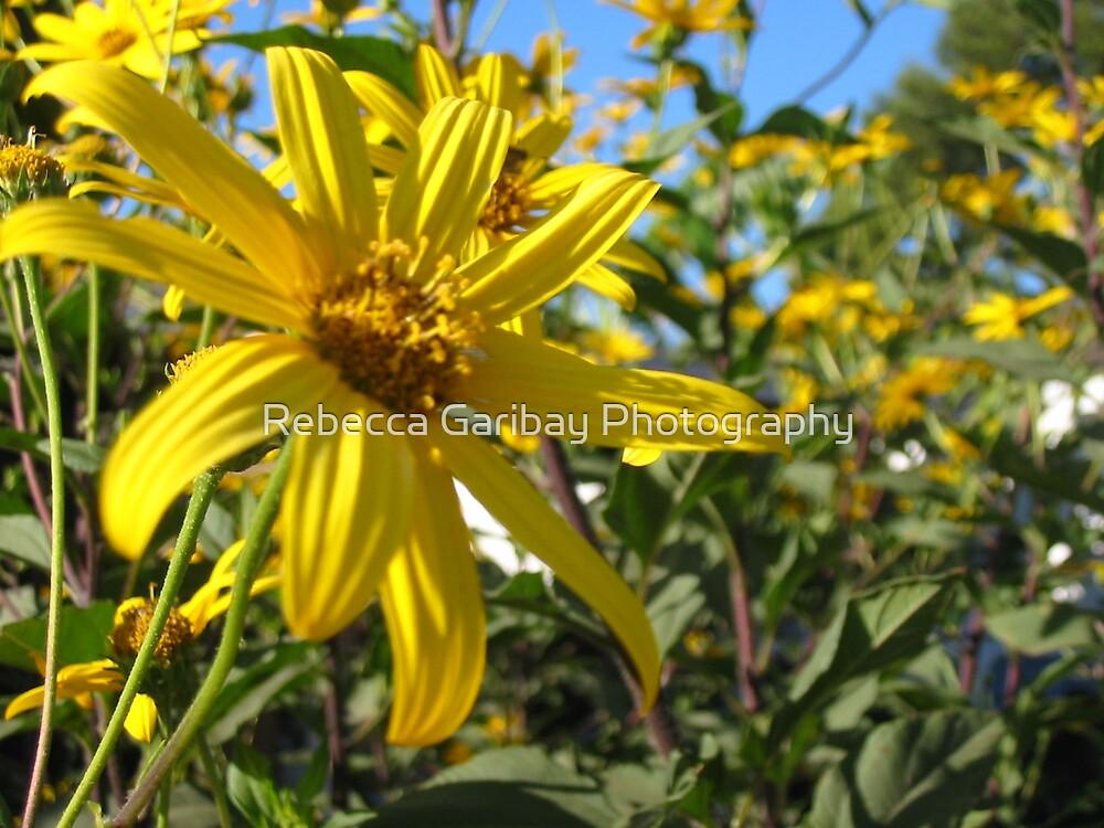 yellow flower by Rebecca Garibay Photography