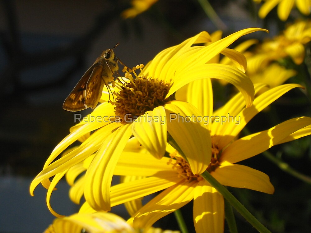 yellow flower  #2 by Rebecca Garibay Photography