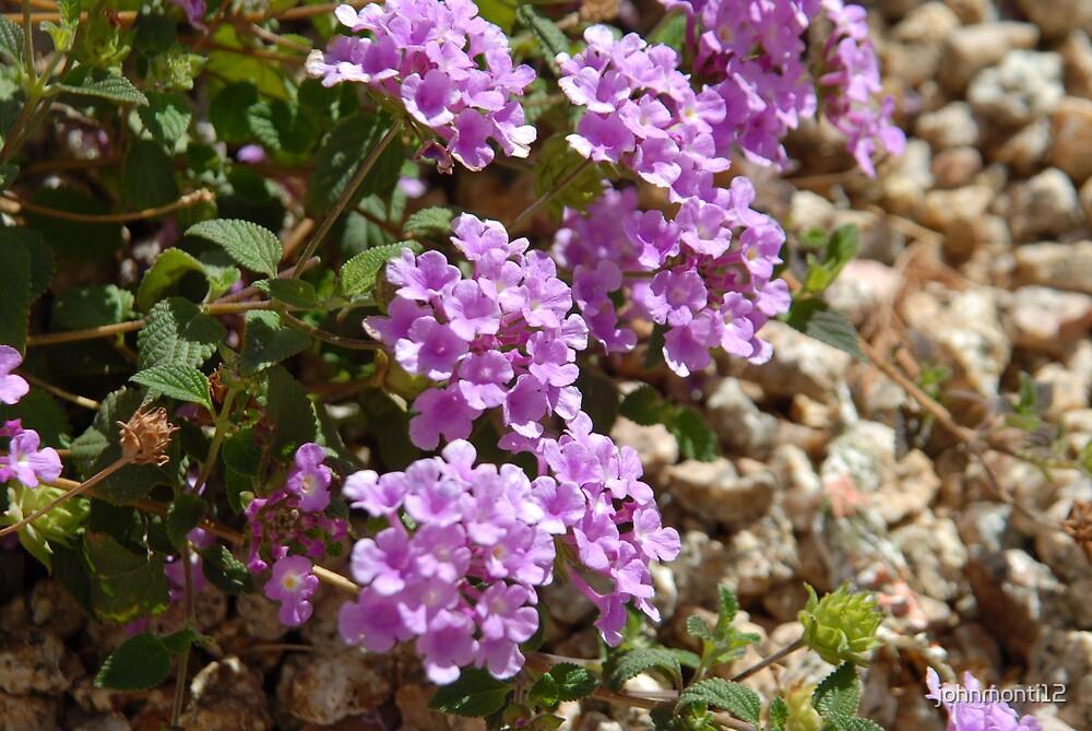 Rhapsody in violet by johnmonti12
