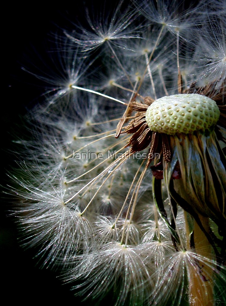 the beauty of small things by Janine Matheson