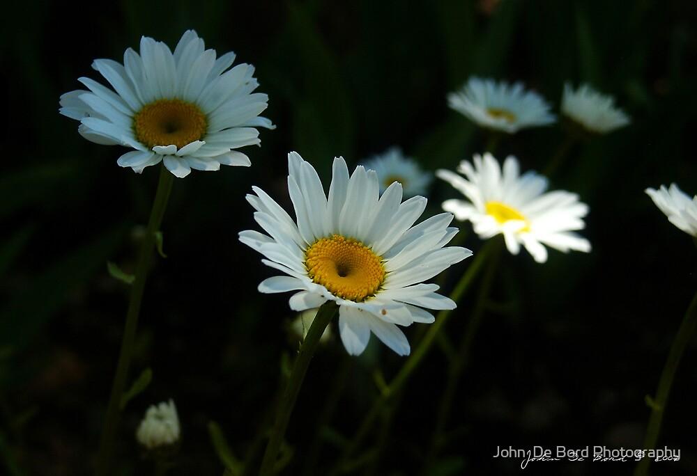 Innocence by John  De Bord Photography