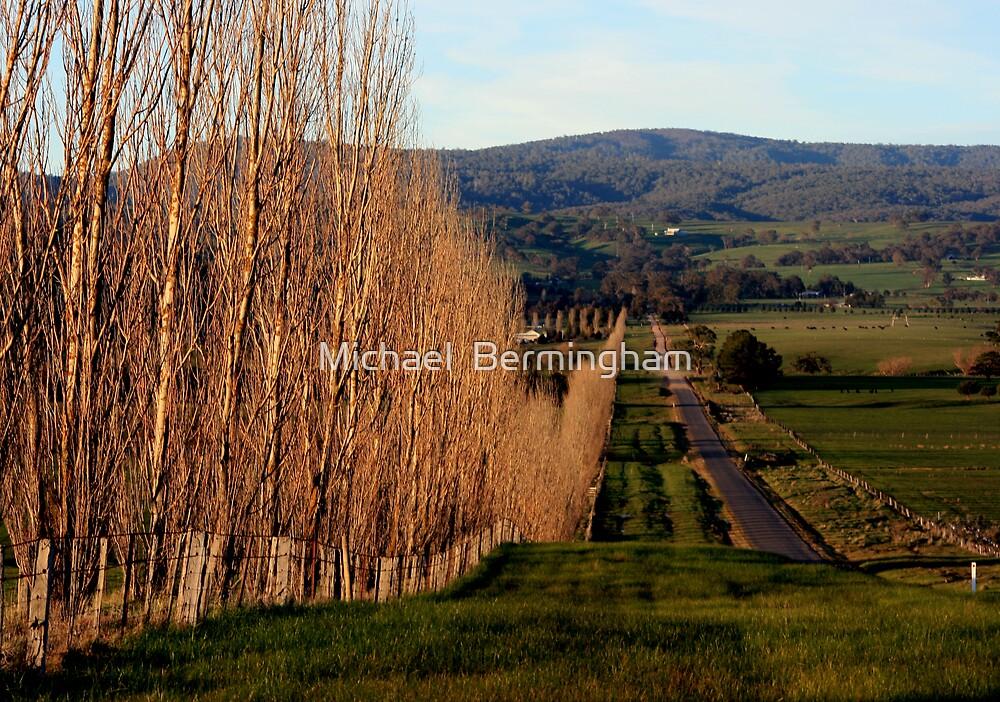 Tree Line by Michael  Bermingham