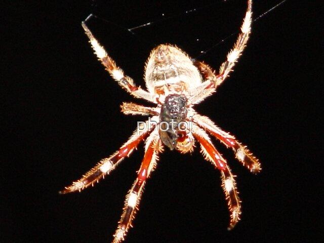 photoj  Spider by photoj