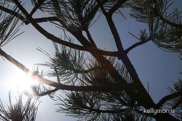 Sun through the trees. by kellymorris