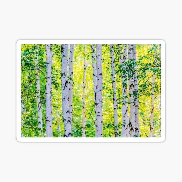 Birch Grove Sticker