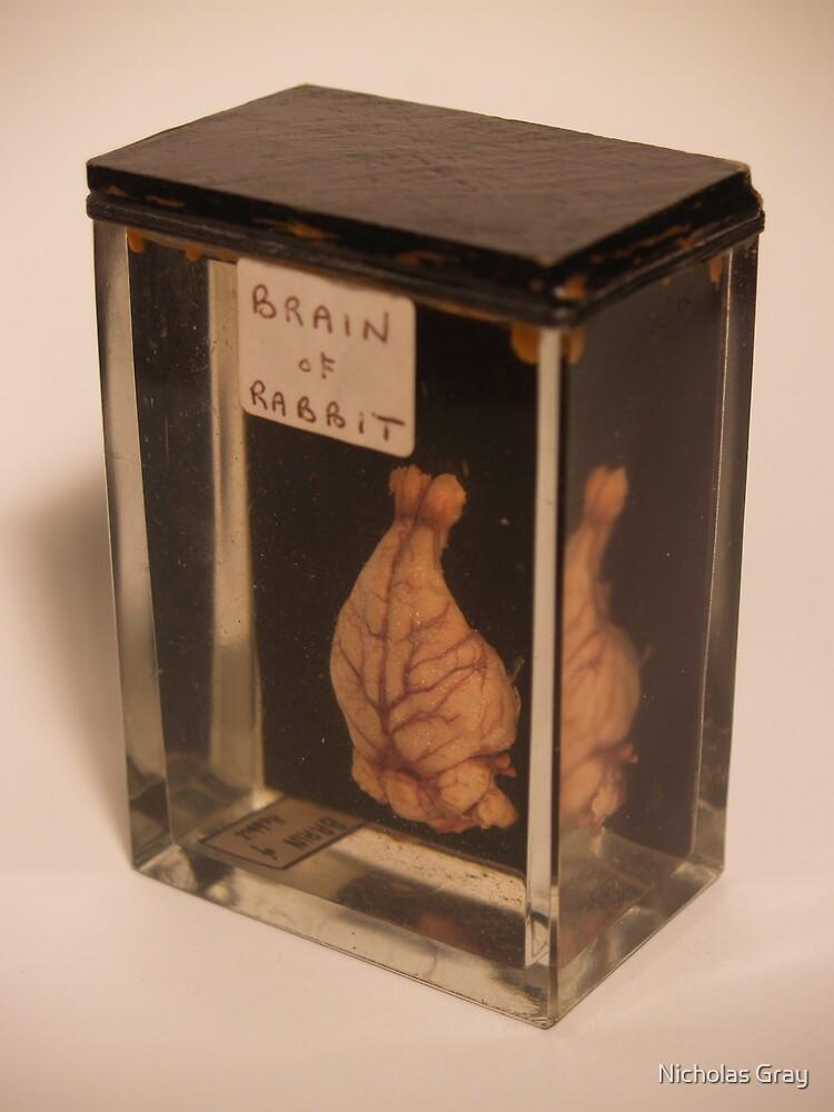 Brain of Rabbit by Nicholas Gray
