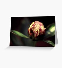 plantscapes Greeting Card