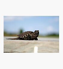 Little Spike Photographic Print