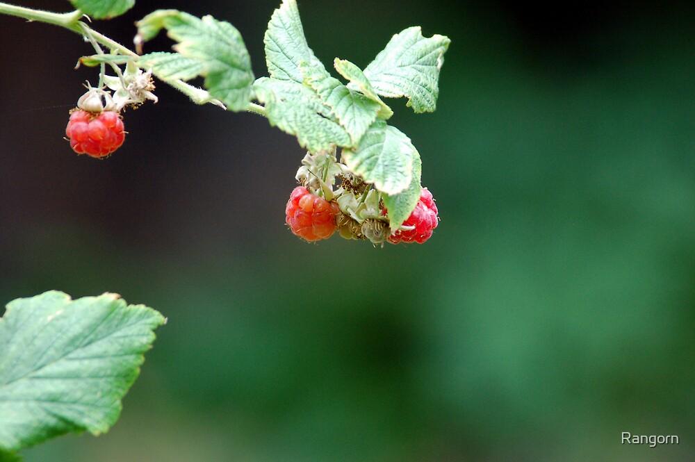 good raspberries  by Rangorn