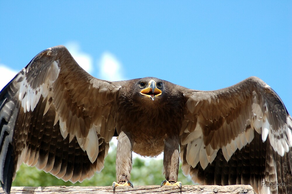 Big eagle not happy ! by Rangorn
