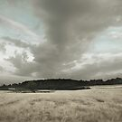 Sommer auf dem Land III (summer at the countryside III) by doubleblind