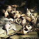 shells by Sezmartyn