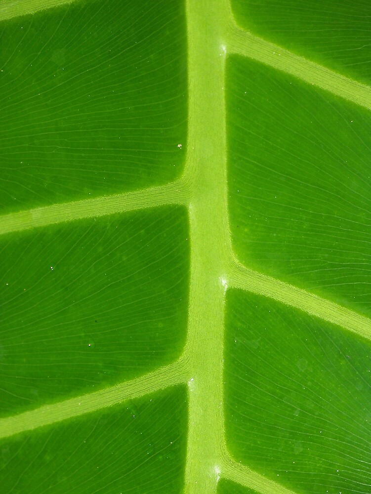 Green Veins by skurm002