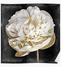 Gilda I Gold and White Peony Poster