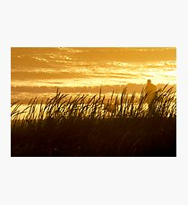 The dog days of summer Photographic Print