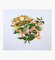 Honeysuckle Bouquet Photographic Print
