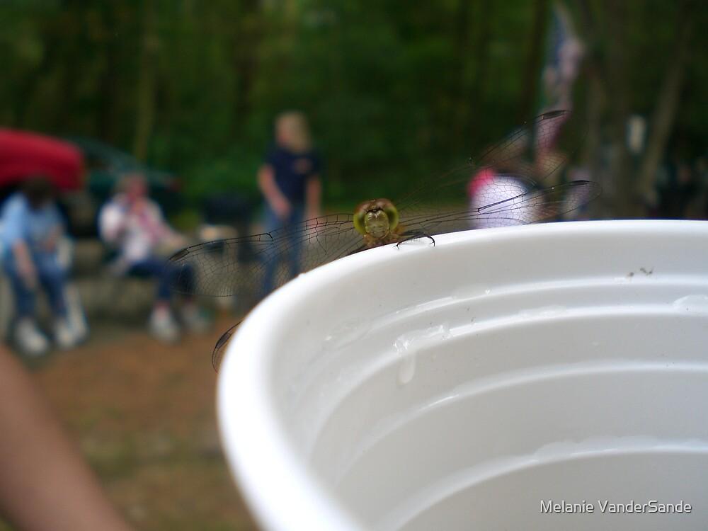Dragonfly by Melanie VanderSande
