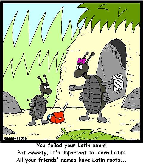 Latin Exam by Hagen