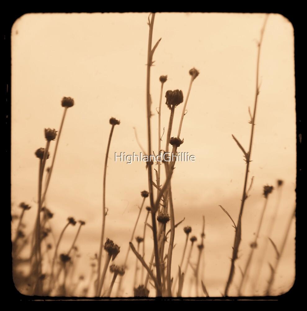 Serenity - Fine Art Viewfinder Photograph by HighlandGhillie