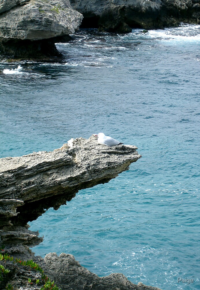 A solitary seagull... by Paige