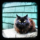 The Mayor's Cat - Fine Art Viewfinder Photograph by HighlandGhillie
