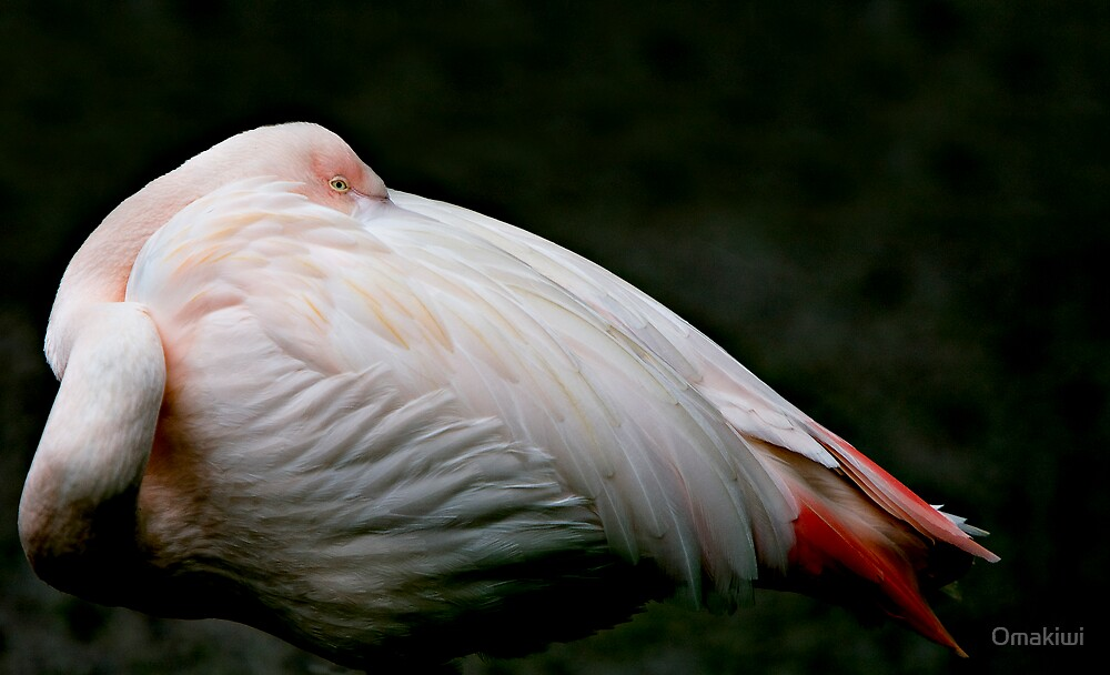 Flamingo by Omakiwi