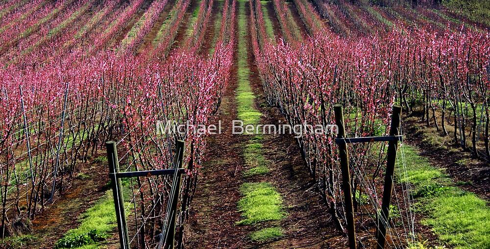 Blossom. by Michael  Bermingham