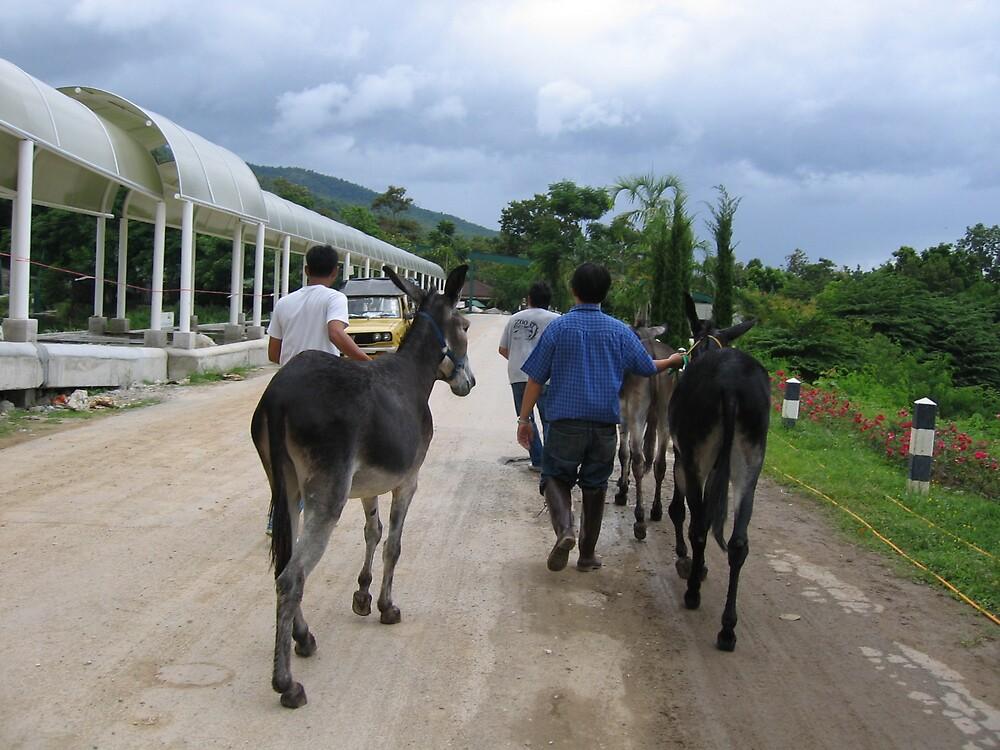 Donkey's ass? by mantahay