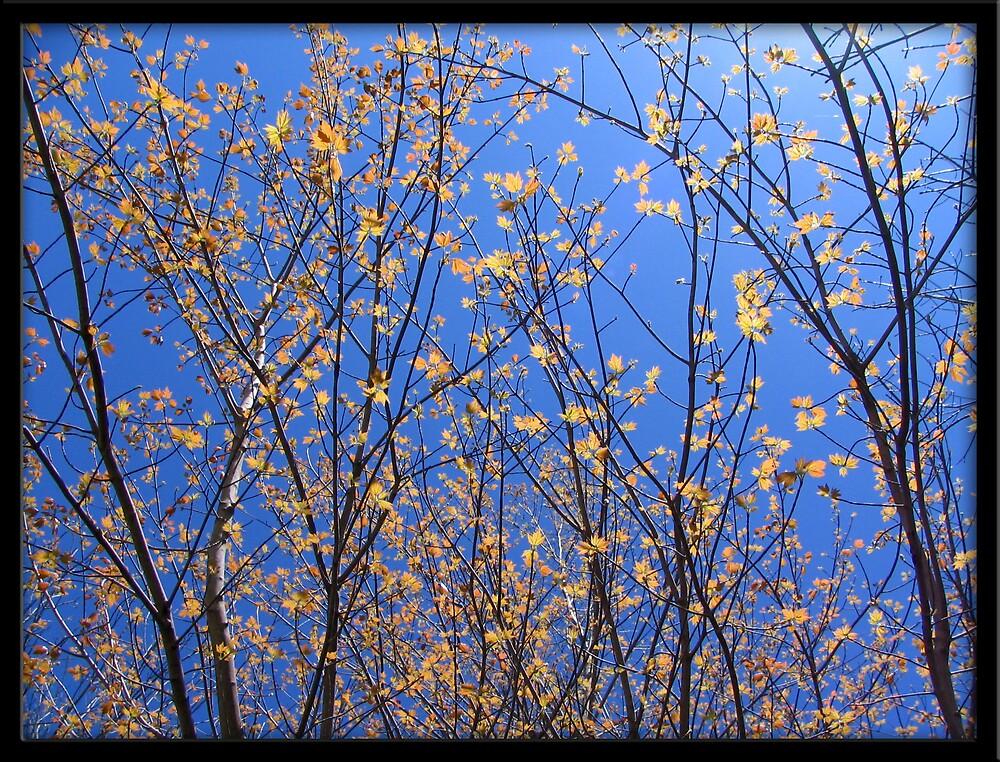 Blue Sky by Shatteredwings