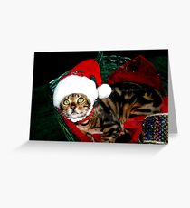 Zen's Christmas Picture Greeting Card