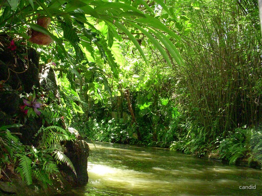 Secret River by candid