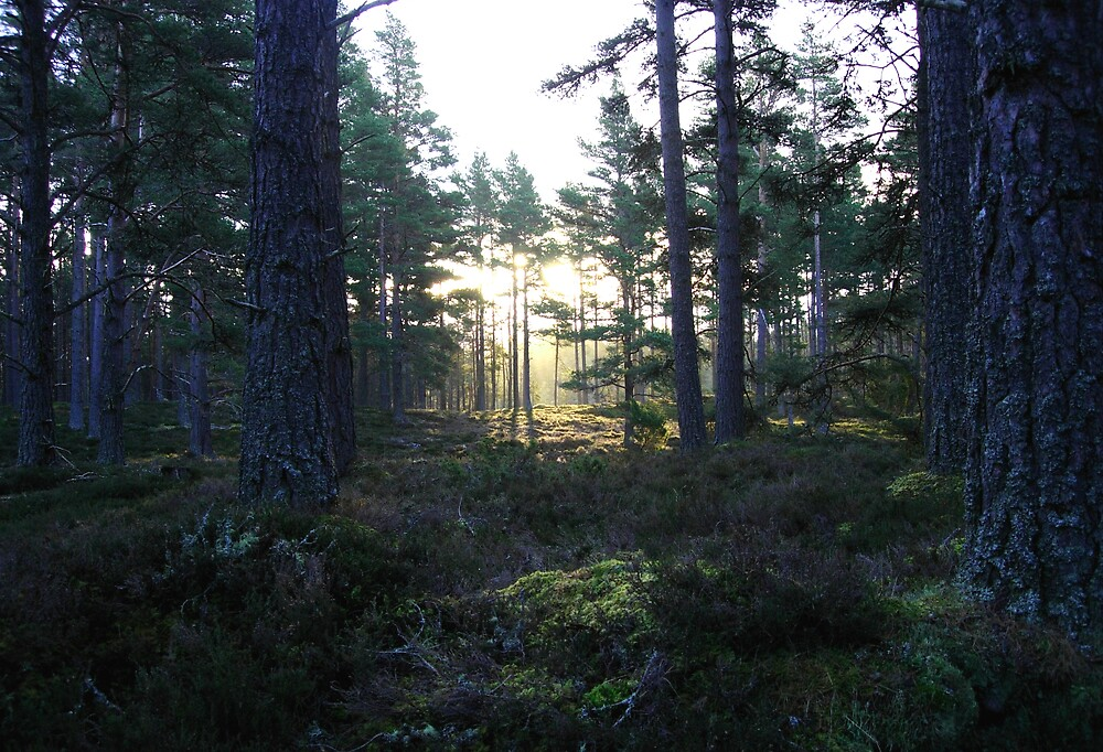 Caladonian Forest by Monster